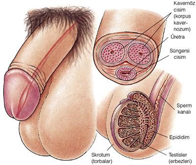 Kadınlar vajinasının yalanmasından hoşlanır mı