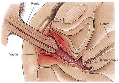 Yüzeysel ağrı: Ağrı vajina girişi çevresinde hissedilir.